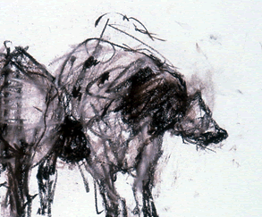 Harry Visser tekeningen
